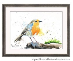 Robin watercolor painting by Dora Hathazi Mendes